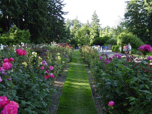 Roses_longhall